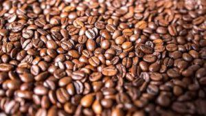 tipos de granos de café